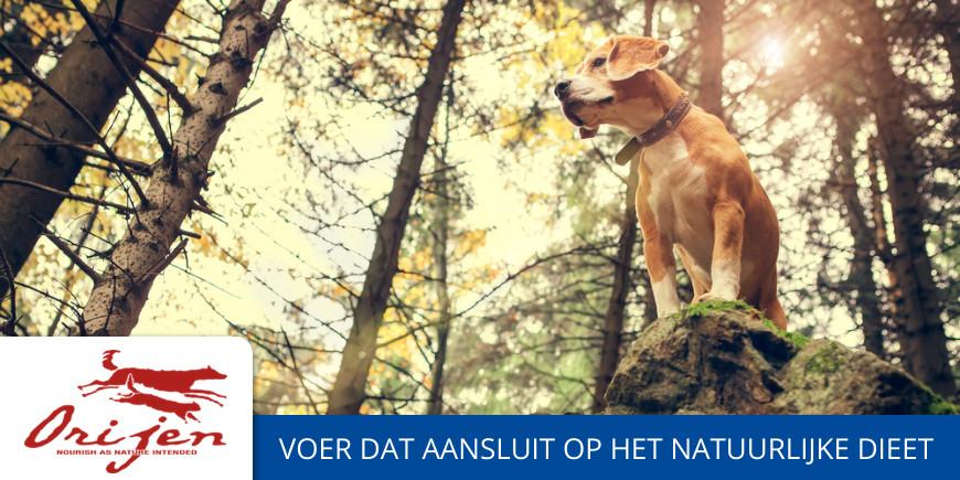 Orijen hondenvoer kopen | Goedkoopste orijen verkooppunten